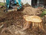 Stump Removal Laguna Beach