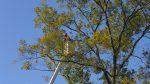 Tree Service Balboa Island