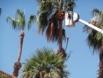 Tree Service Jasmine Creek Newport Beach
