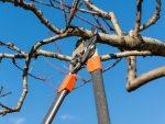 Tree Service Laguna Beach