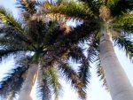 Tree Service Newport Beach