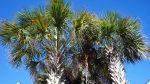 Tree Service Newport Coast
