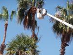 Tree Service Laguna Beach Heisler Park
