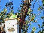 Tree Service Top of the World Laguna Beach